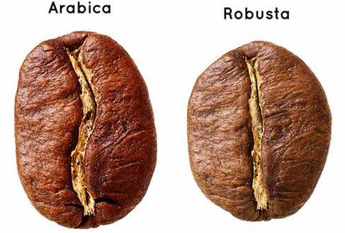 Cómo comprar, elegir y preparar el mejor café en grano