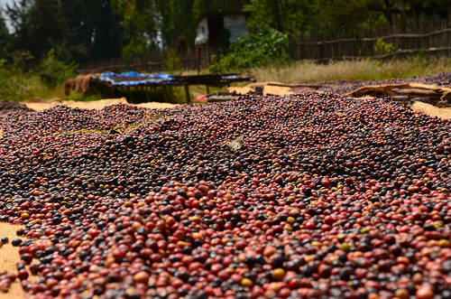 cafe etiopia