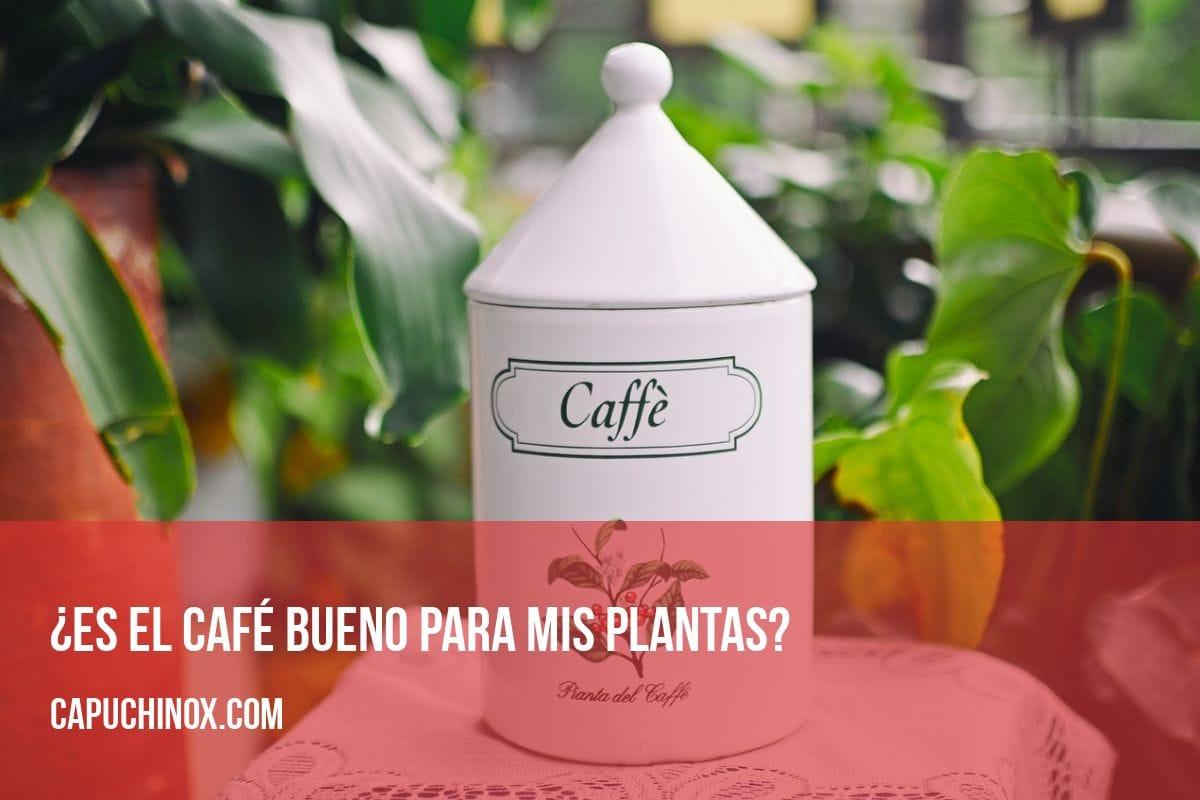 ¿Es el café bueno para mis plantas?